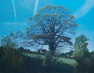 Annie Ovenden - Oak At Trewoon
