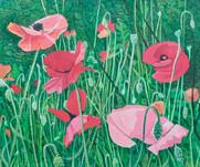 Annie Ovenden - Poppies