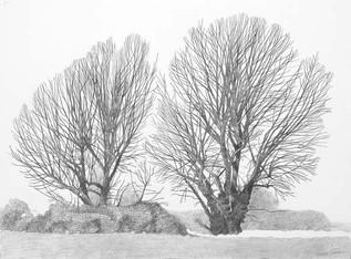 Annie Ovenden - Two Willows On Leyton Marsh