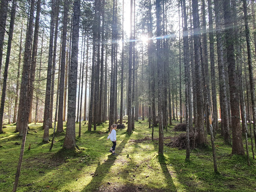 The importance of forest in Finland & its relationship with kids