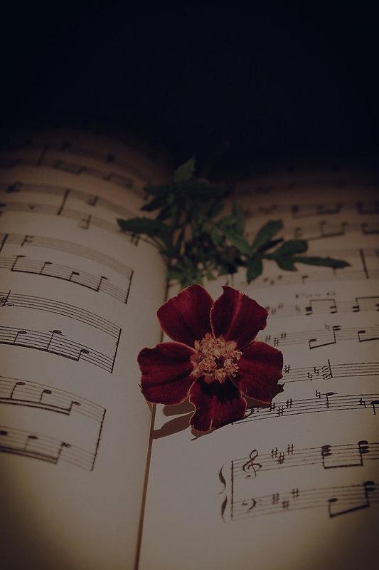 musical-note-3796909_1920_edited.jpg