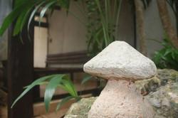 Hongo de piedra