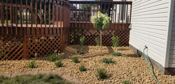 New planting of Hydrangea tree, lilies and ornamental onion