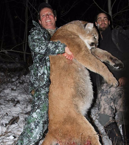 Lodge based Mountain Lion Hunts in Idaho
