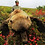 Affordable Grizzly Hunts in Alaska