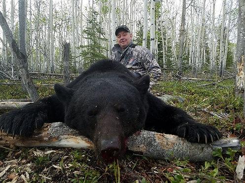 Baited Black Bear Hunts in Alaska