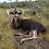 Affordable Drop Camp Moose hunts