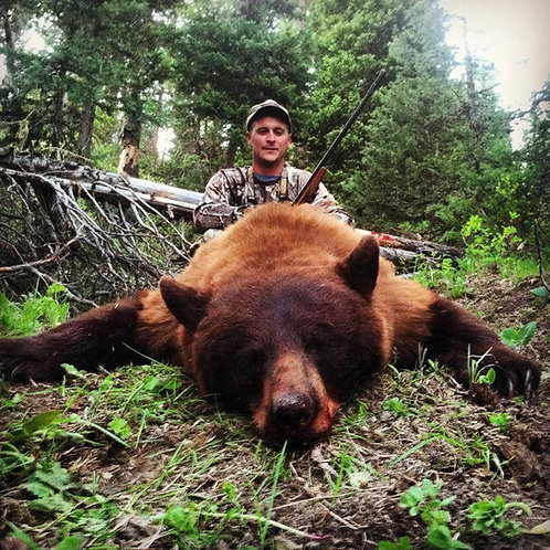 Color Phase Black Bear Hunting