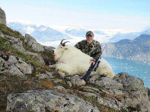Archery Mountain Goat Hunt in Alaska