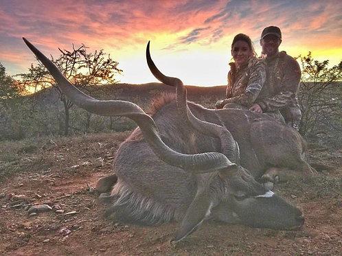 Kudu, Eastern Cape Safari, South Africa