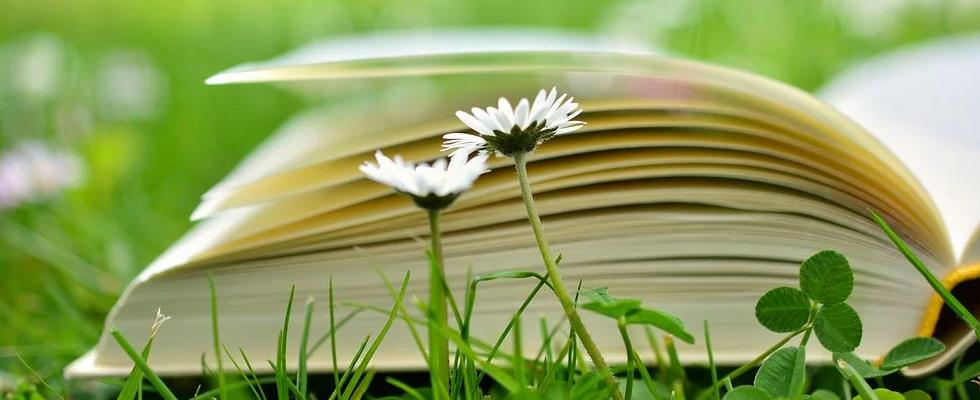 book-2304389__480.webp