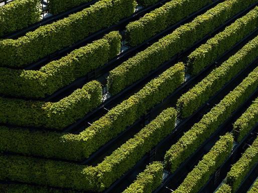 Екологічно стійка архітектура