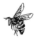 Harvest-cafe-abeille.png