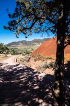Shady Desert Path
