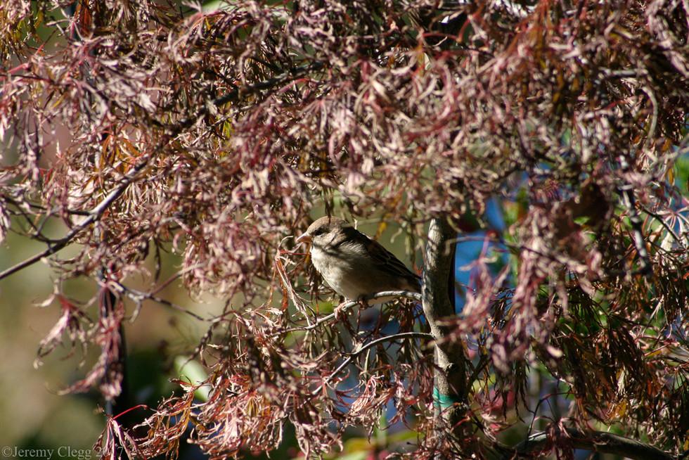 Finch in Ferns