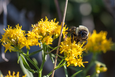 Im'a Bee