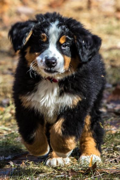 A Pup Named Bear