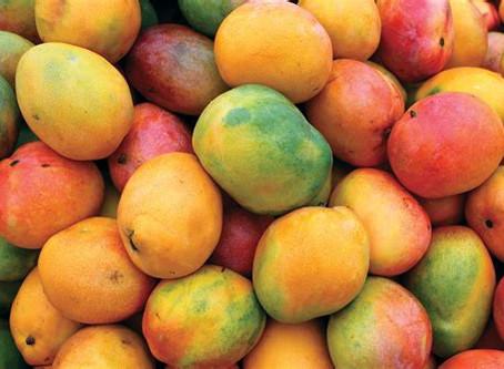 Mangolicious delight
