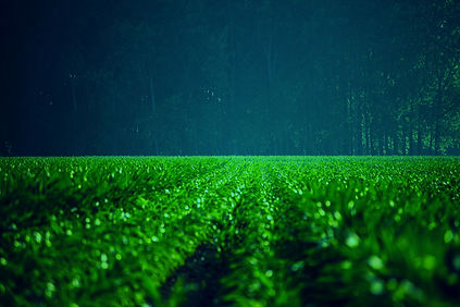Green%252520Field_edited_edited_edited.j