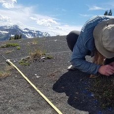 Courtenay Ray conducting some socks-only field work