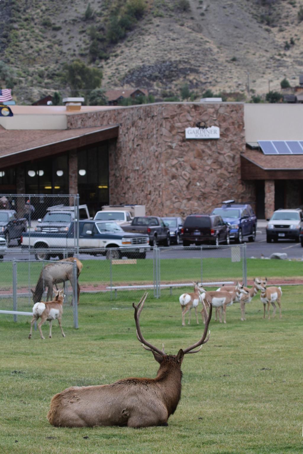 Elk and Pronghorn