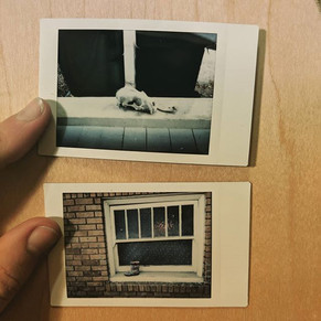 Here's two of my recent favorite #instax