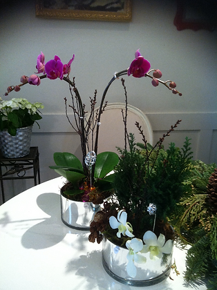 Plant #3