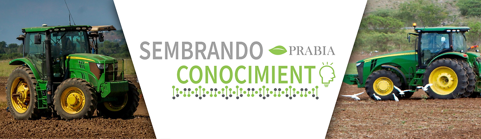 PRABIA BANNERS-08.png