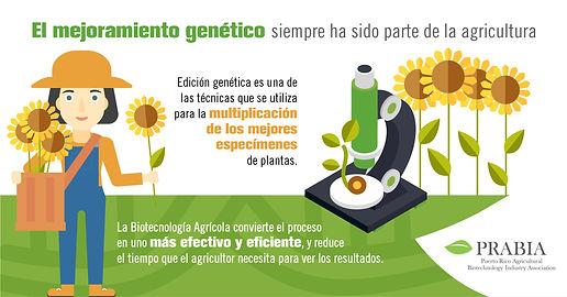 El mejoramiento genético siempre ha sido parte de la agricultura