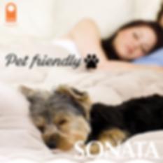Hotel-Sonata-Pet-no-phrases.png