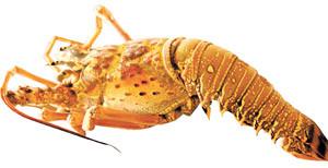 a melhor lagosta brasileira  no Ceará
