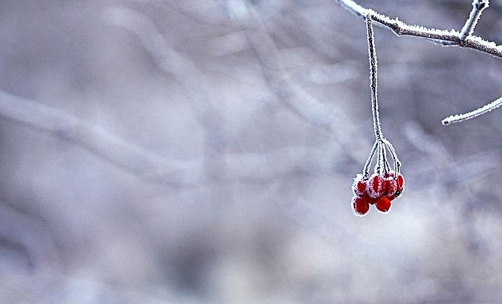 frozen-201495_1280.jpg