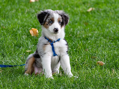 Pet-Friendly Lawn Care Tiffin OH