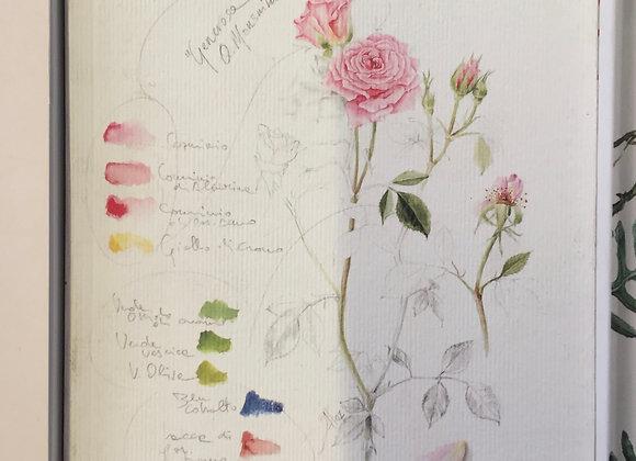 Rose & rose