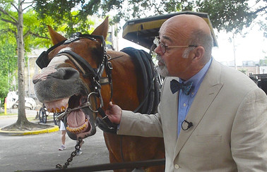 Charlie James the Carriage Horse