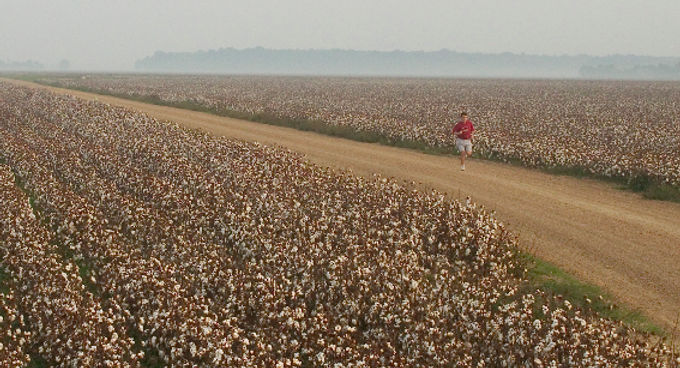 Running through a Mississippi Delta cotton field