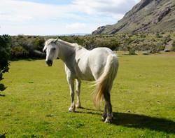Pferde 18