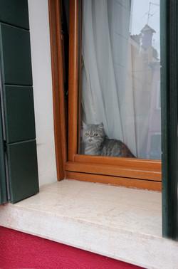 Katzen 19