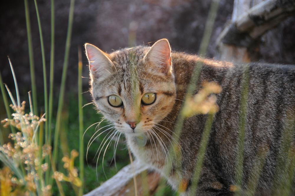 Katzen 18