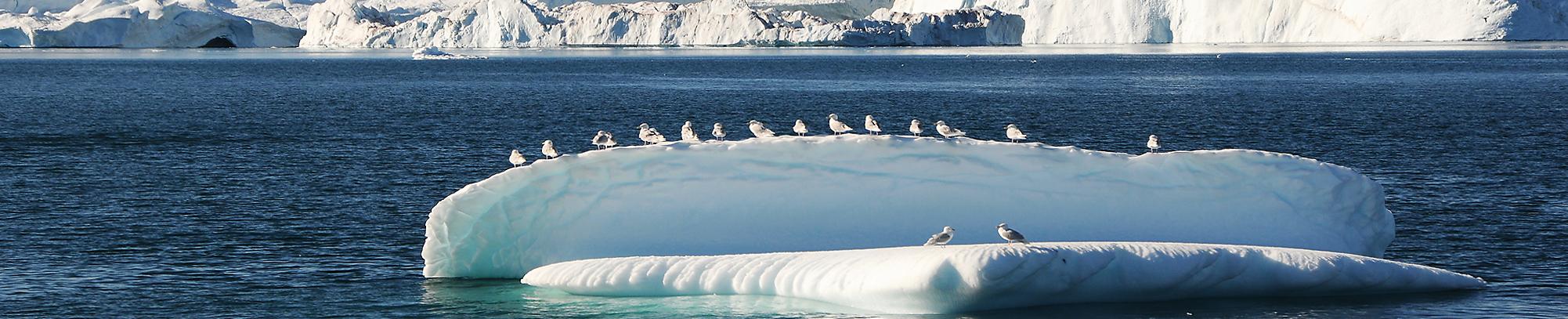 Header_Grönland