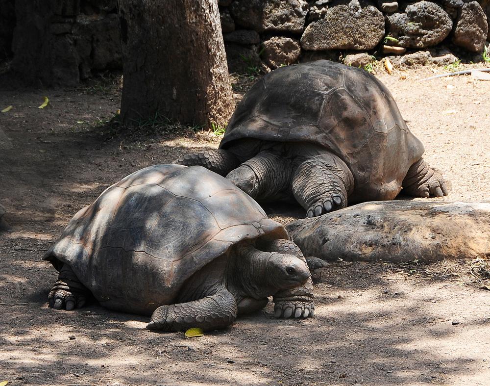 Schildkröten_1