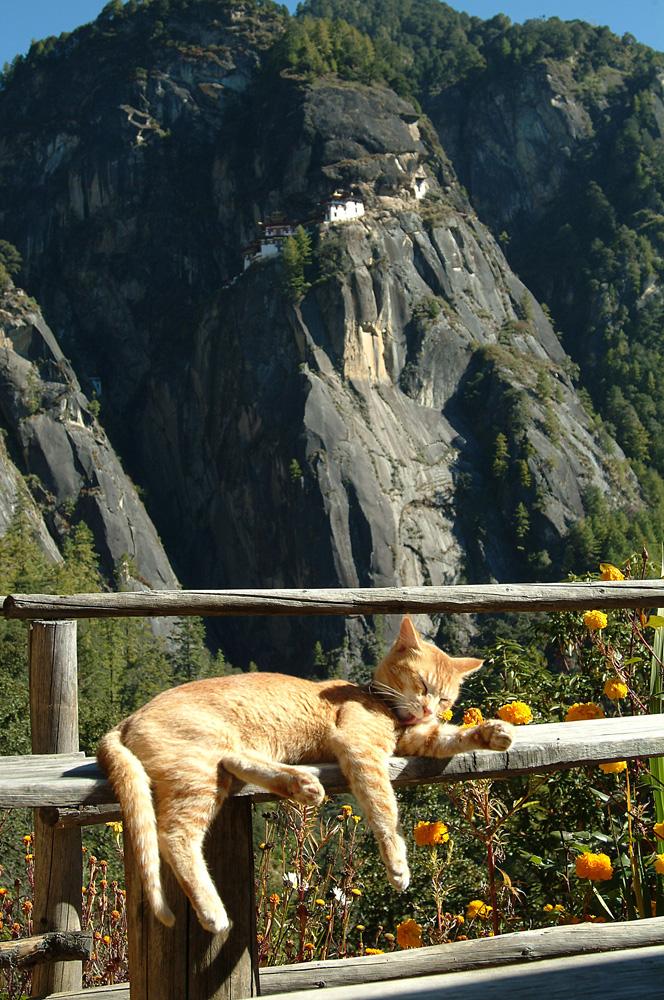 Bhutan 13
