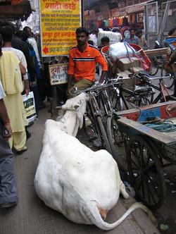 Indien 5