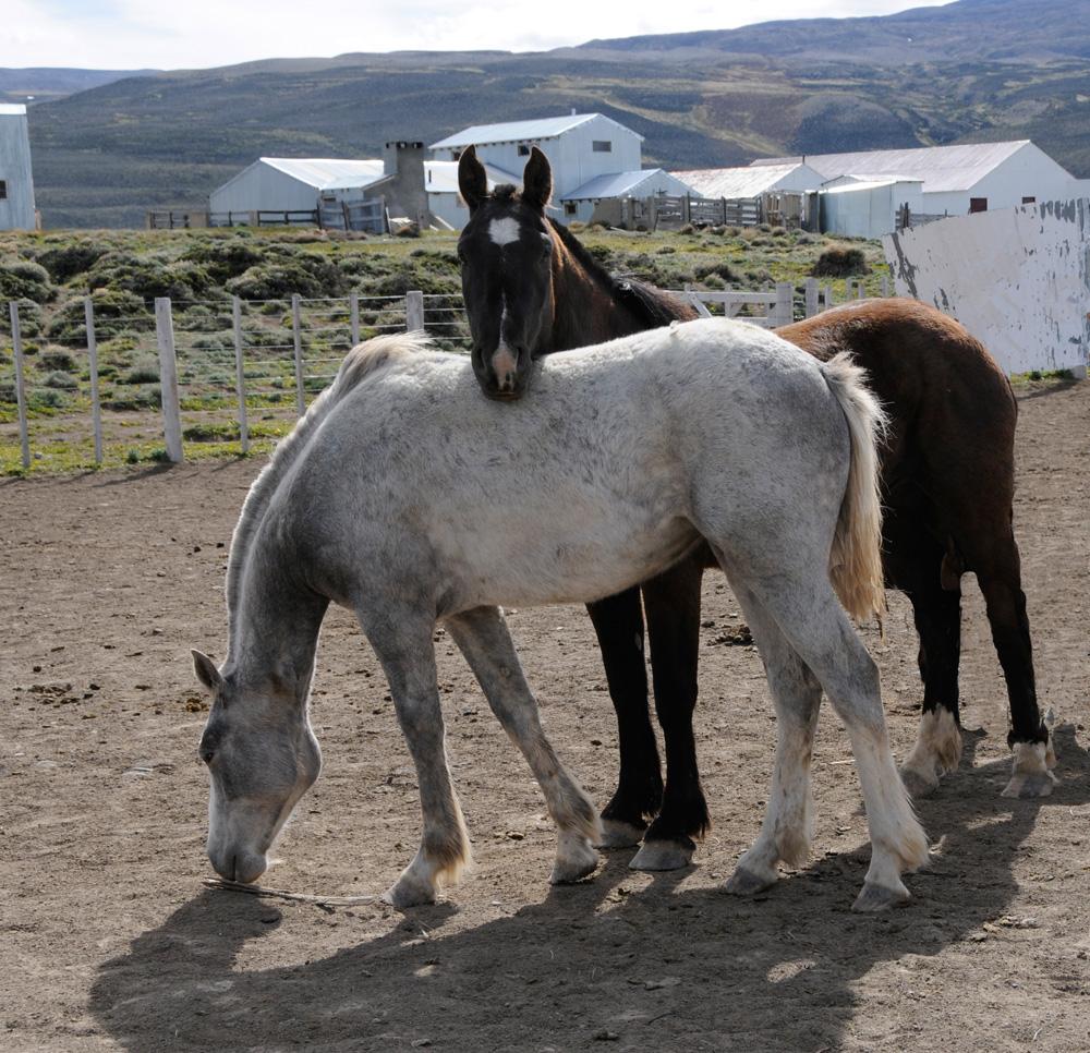 Pferde 15