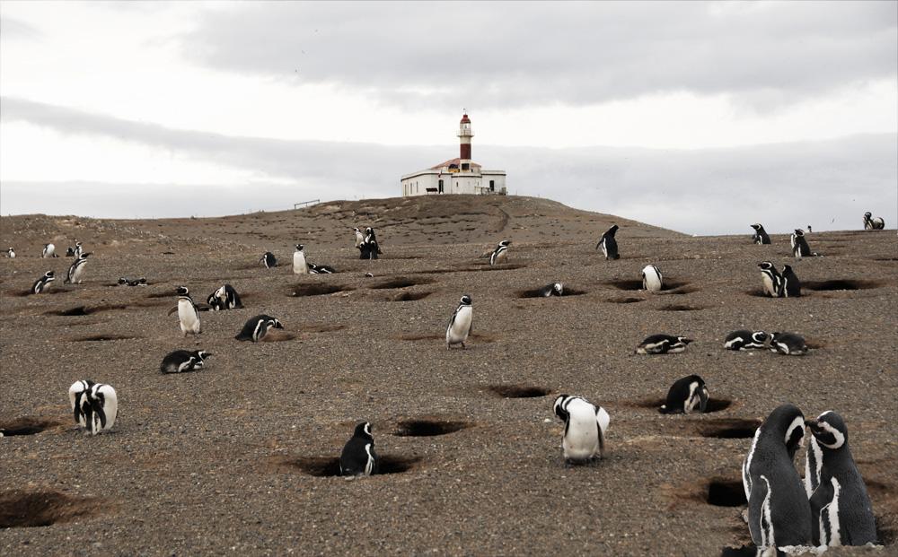 Pinguine 6
