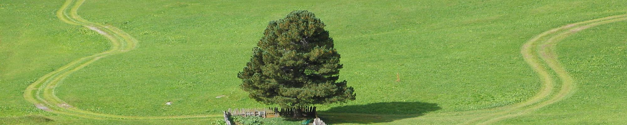 Header Bäume