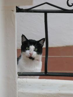 Katzen 23