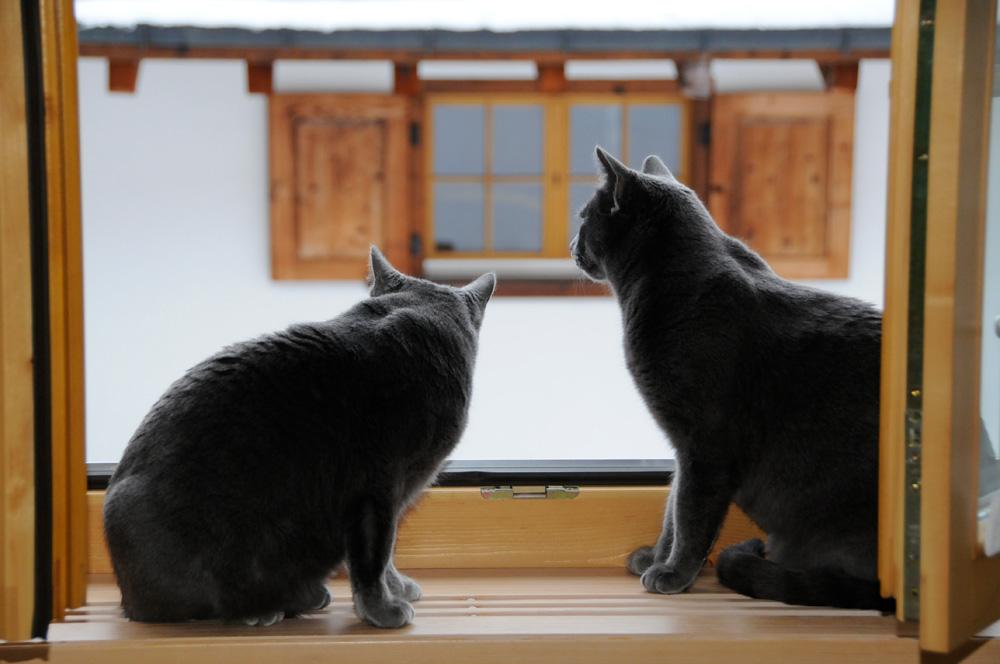 Katzen 4