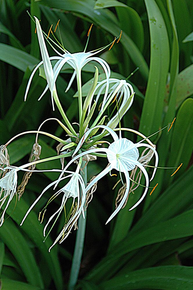 Blume 9