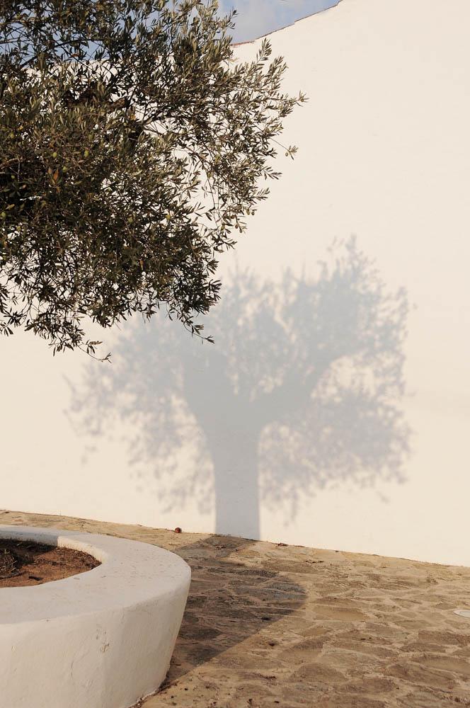 Baum 7